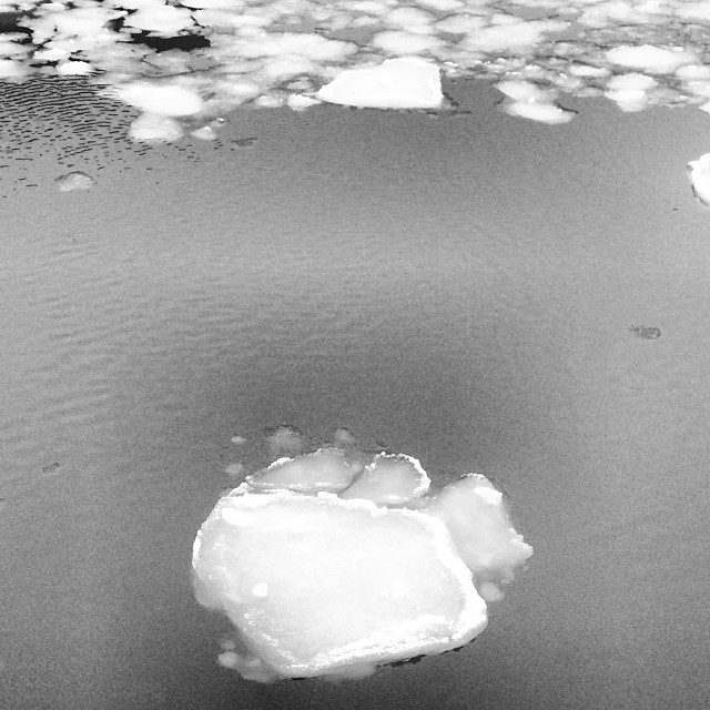 #monster #pawprint #godzilla in #copenhagen