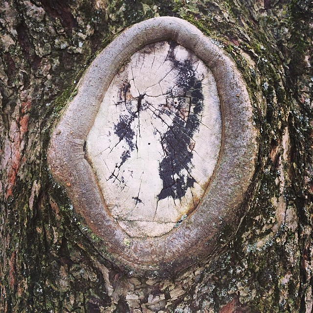 Tree spirit - very studio #Ghibli #iseefaces #pareidolia