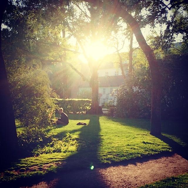 Late #evening #sun in #kongeligebibliotekshave #copenhagen