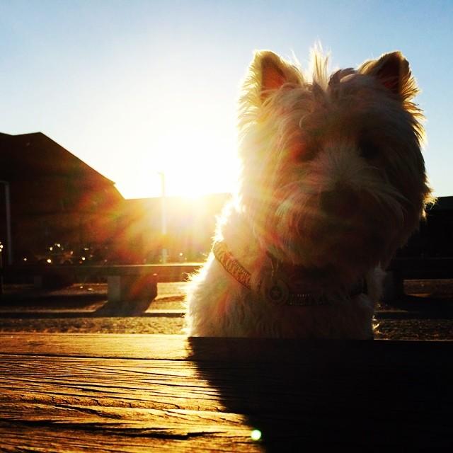 #moomin #sunkissed on the #docks - #copenhagen