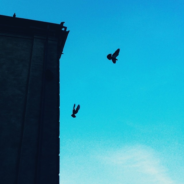 Attack from on high - #pigeons #copenhagen #blue #birds #silhouette