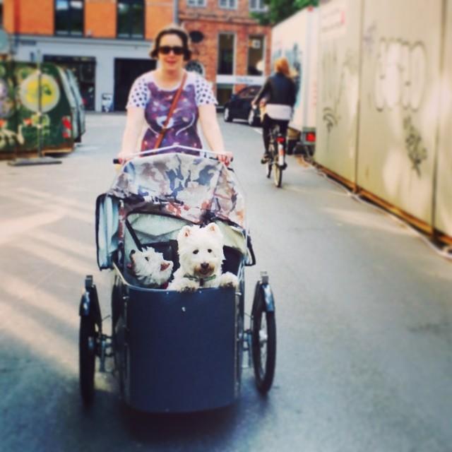 #summer #nihola #bike adventure in #copenhagen with #moomin and #Marcy - #westies #bikedogs