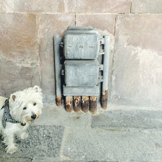 #marcy the #westie meets someone new but they are not much fun - #pareidolia #iseefaces