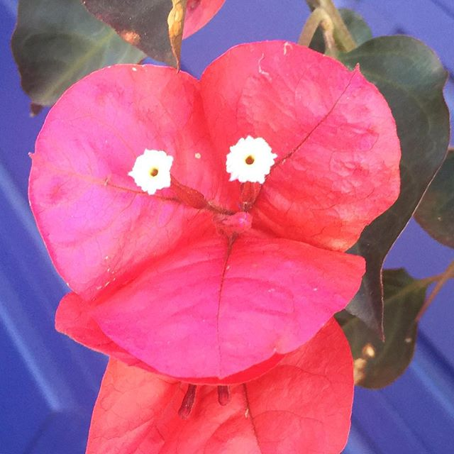 #iseefaces #pareidolia #flowers