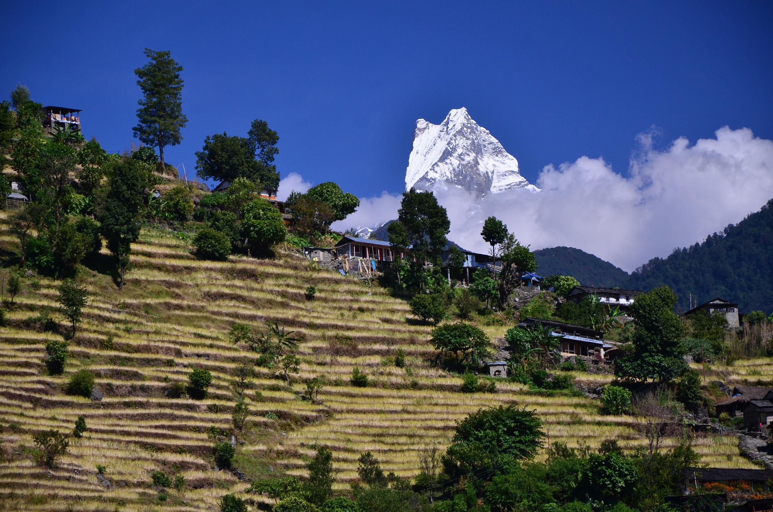 Peaks and Terraces