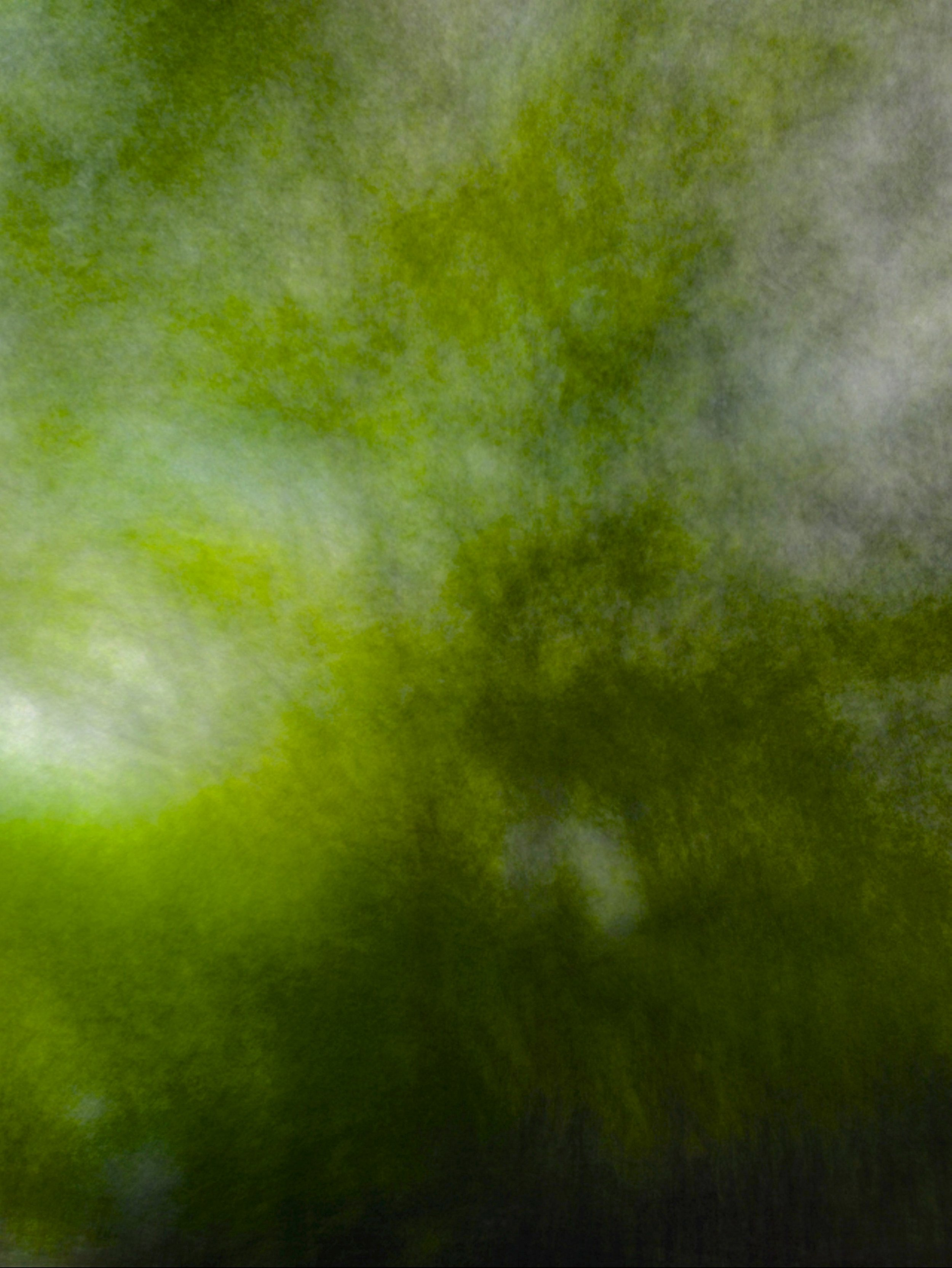 Blur:Trees.JPG