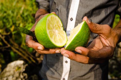 Moshmi (large, sweet lime)