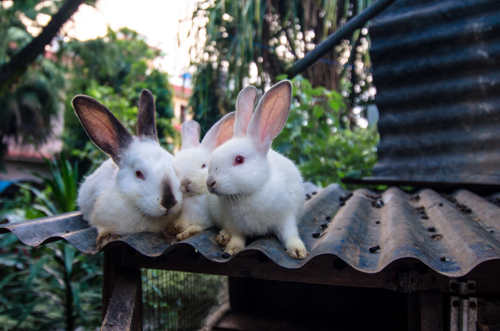 Bunnies at our guesthouse. They became our friends and we were a little sad to say goodbye to them.