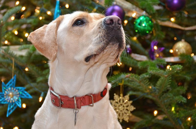 dog_ranch_christmas2.jpg