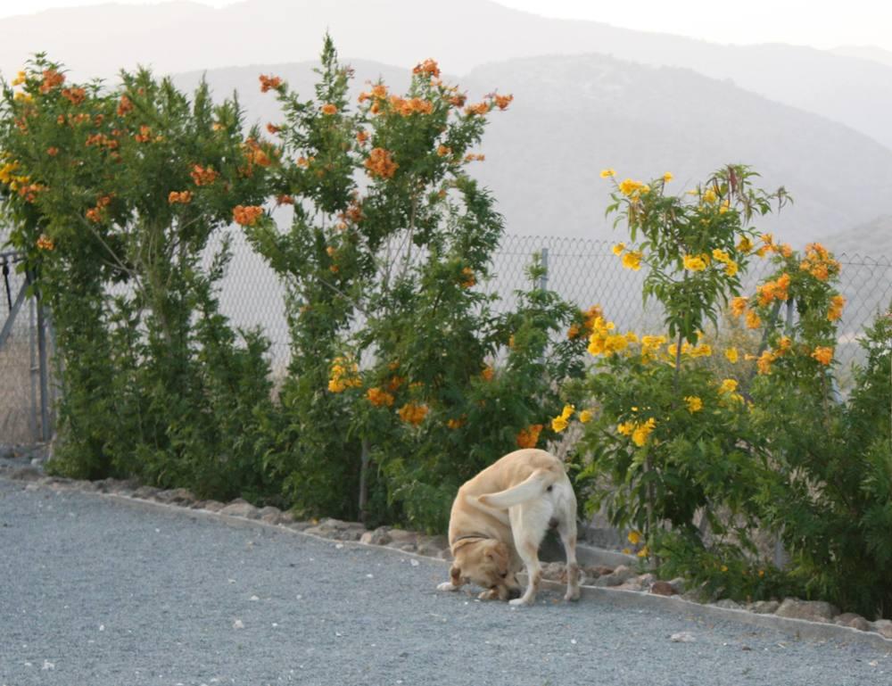 dog_ranch_limassol_dog_hotel_01.jpg
