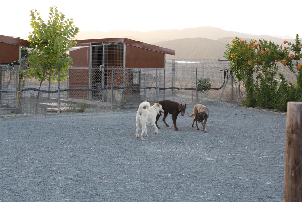 dog_ranch_limassol_dog_hotel_06.jpg
