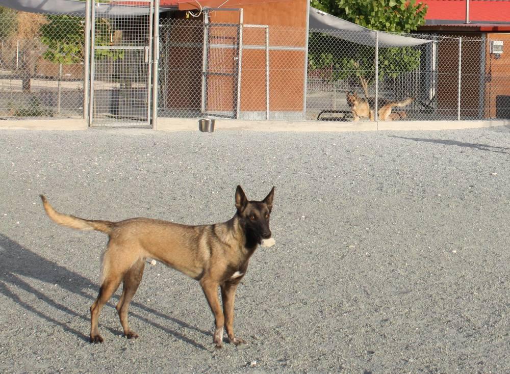 dog_ranch_limassol_dog_hotel_010.jpg