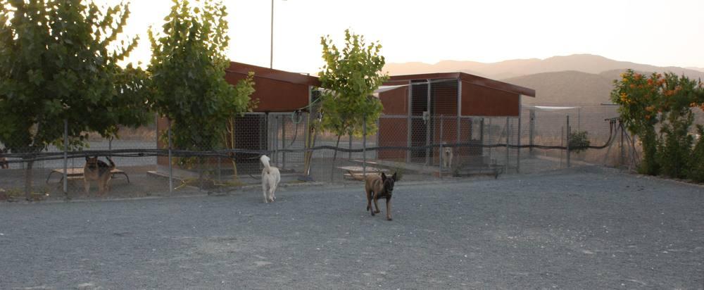 dog_ranch_limassol_dog_hotel_014.jpg