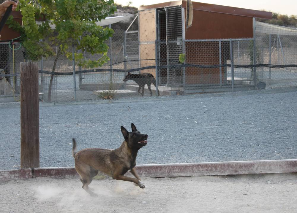 dog_ranch_limassol_dog_hotel_015.jpg