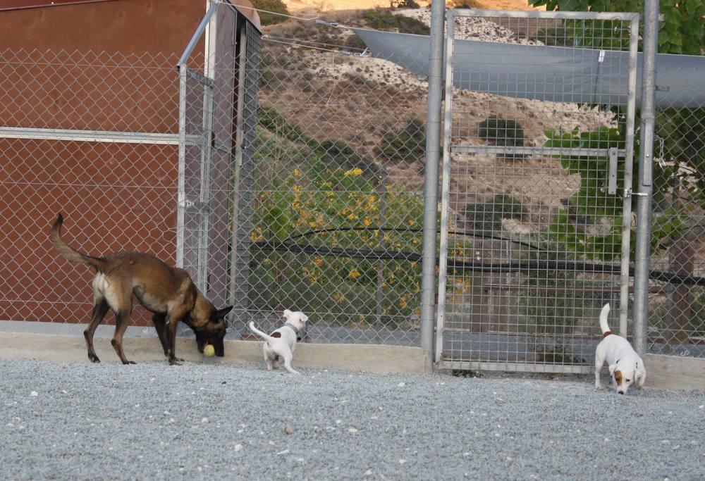 dog_ranch_limassol_dog_hotel_018.jpg