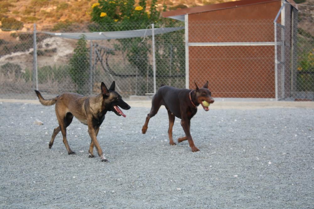 dog_ranch_limassol_dog_hotel_019.jpg