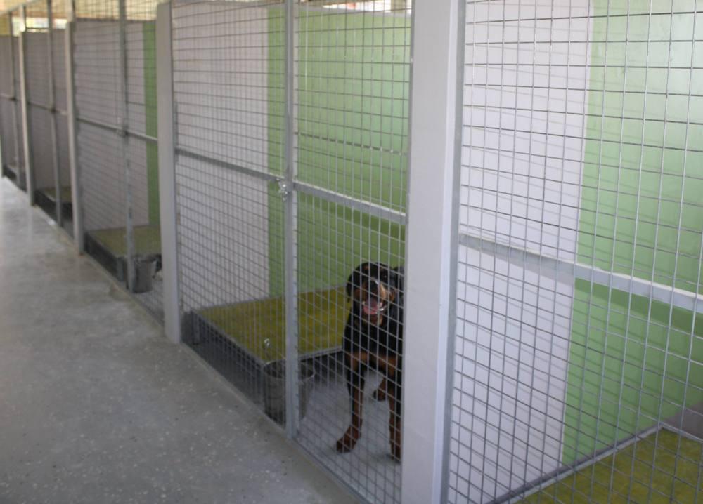 dog_ranch_limassol_dog_hotel_021.jpg