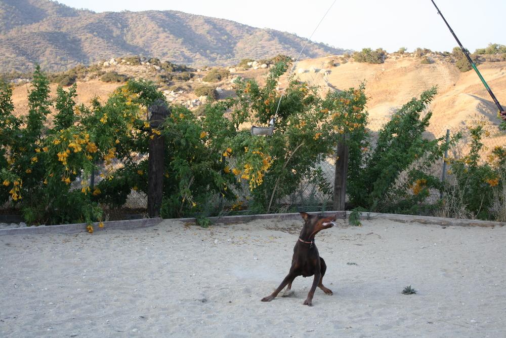 dog_ranch_limassol_dog_hotel_022.jpg