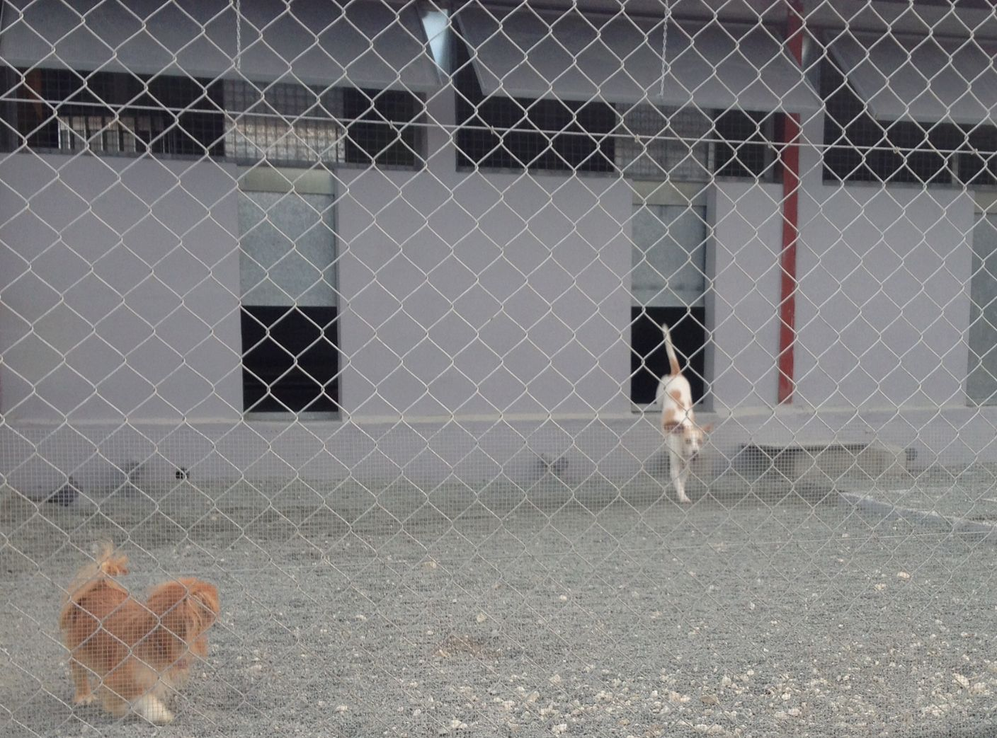 dog_ranch_indoor_kennels_dogs_playing.jpg