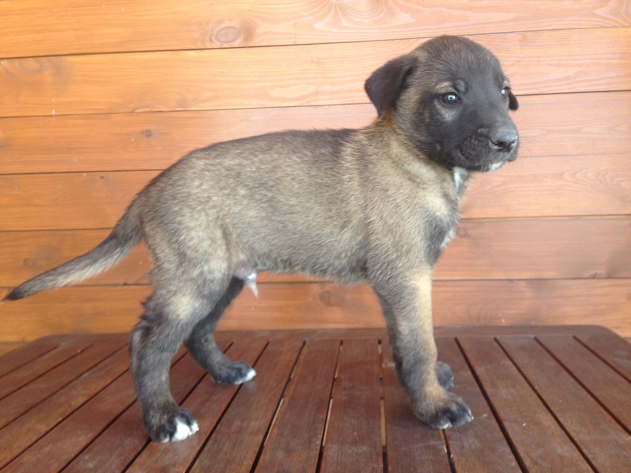 Male puppy #3