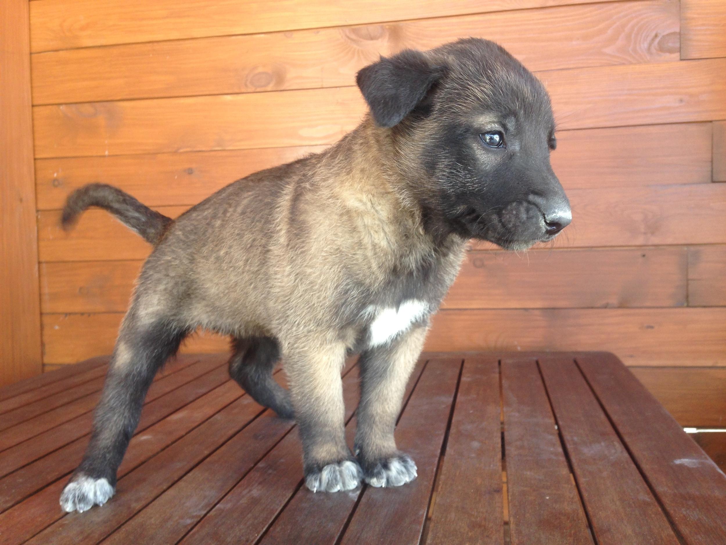 Female puppy #5