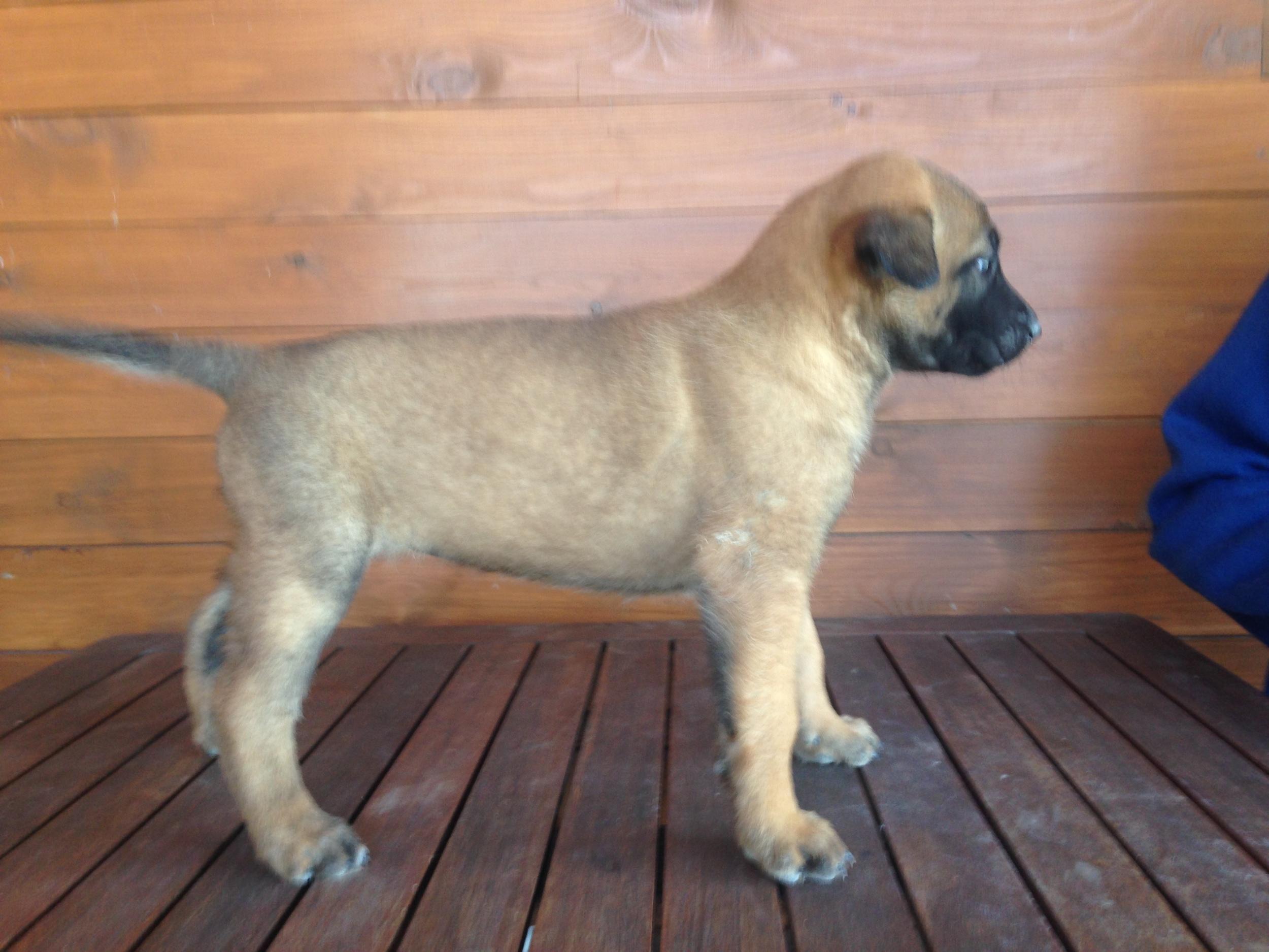 Female puppy #6
