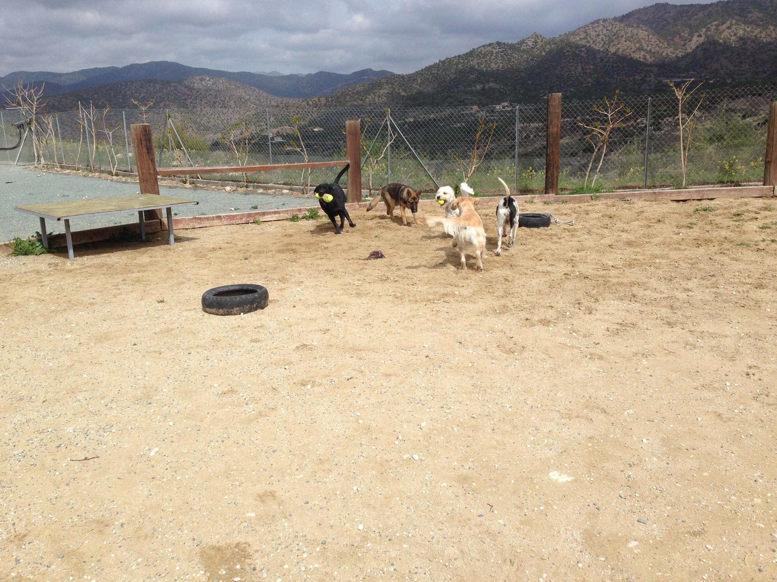 Dog Ranch - Dog Hotel - Fenced Run/Exercise/Training Area