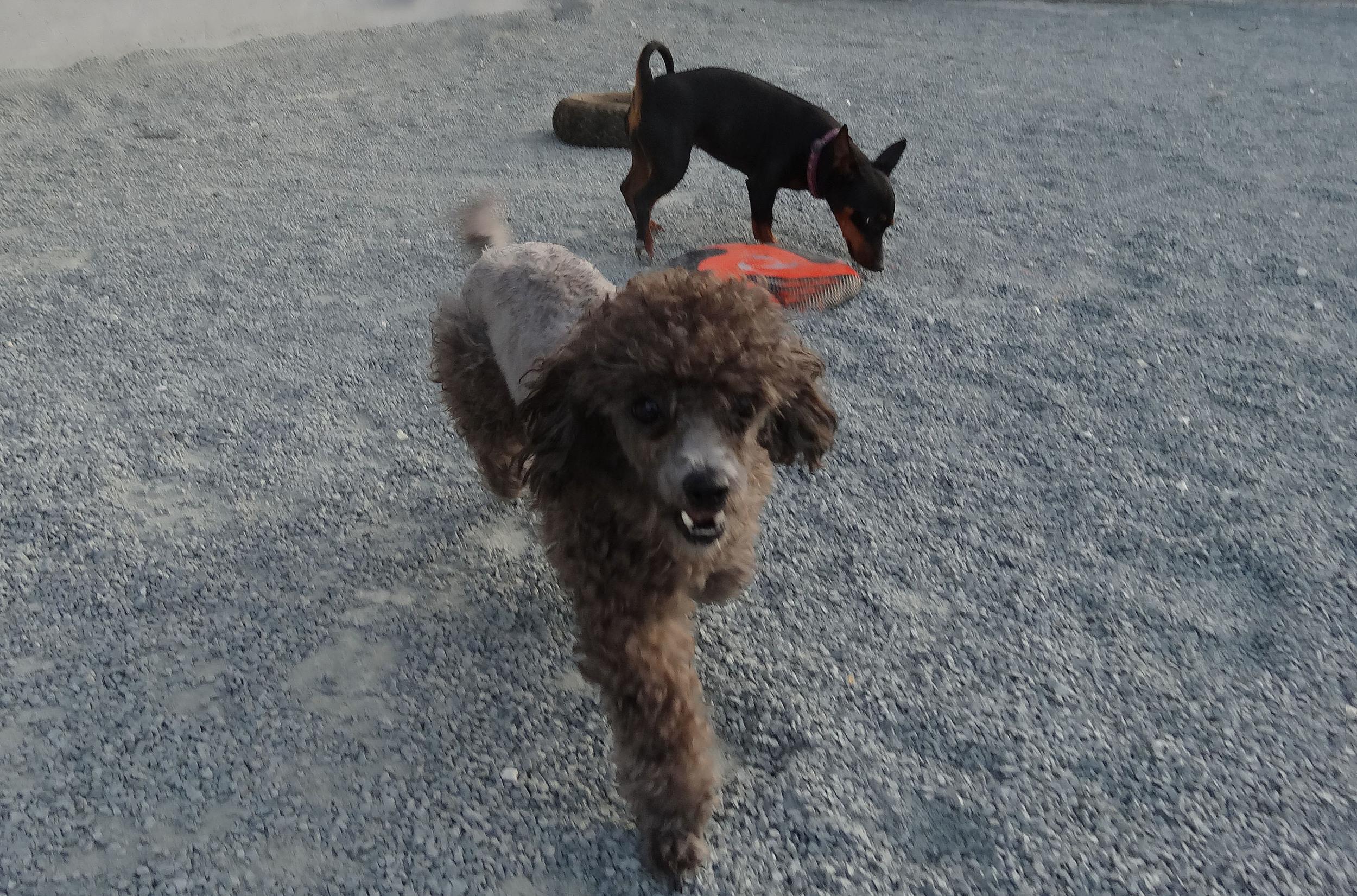 dog_ranch_cyprus_dog_hotel_kalli_2.jpg