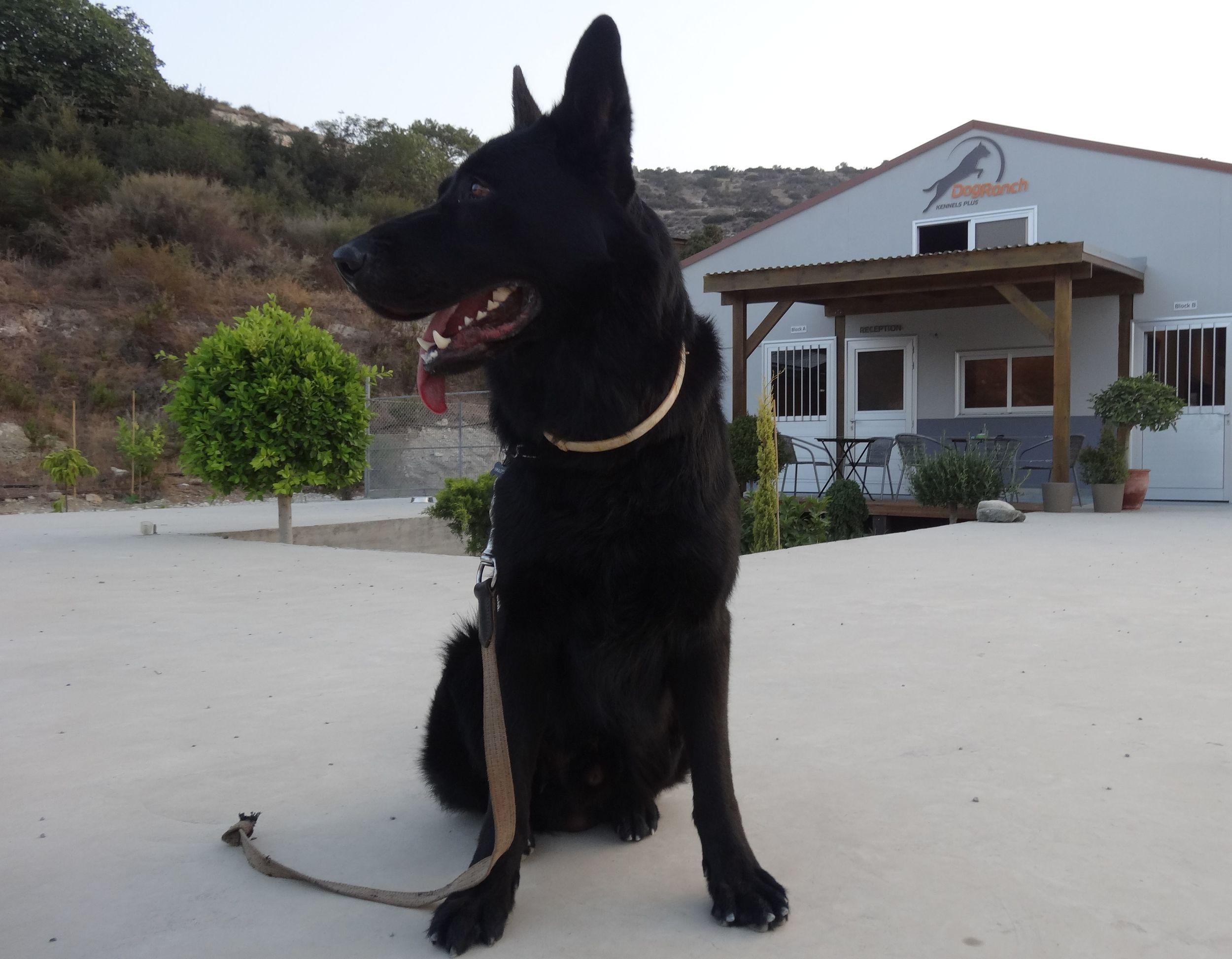 dog_ranch_cyprus_dog_hotel_ays.jpg