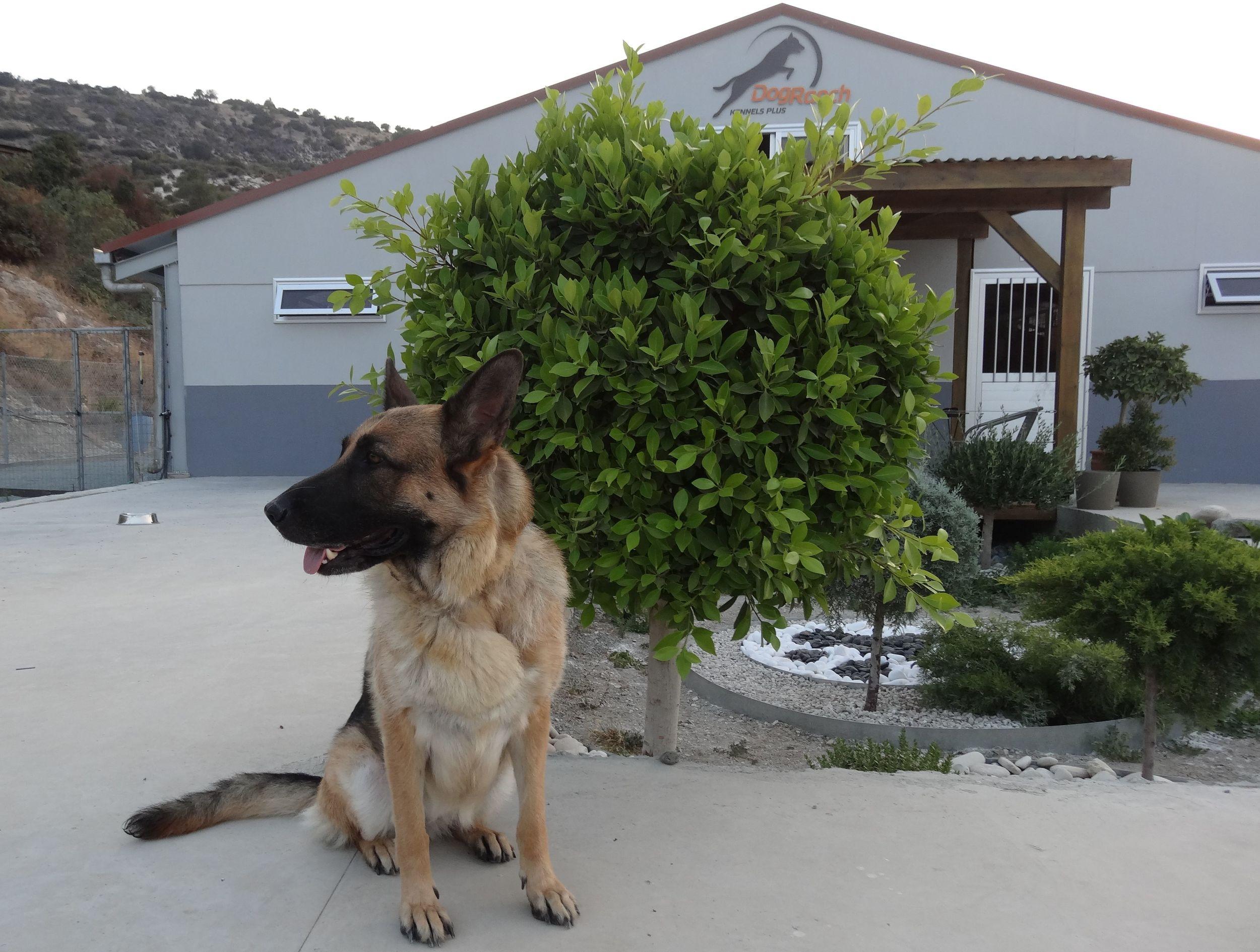 dog_ranch_cyprus_dog_hotel_era.jpg