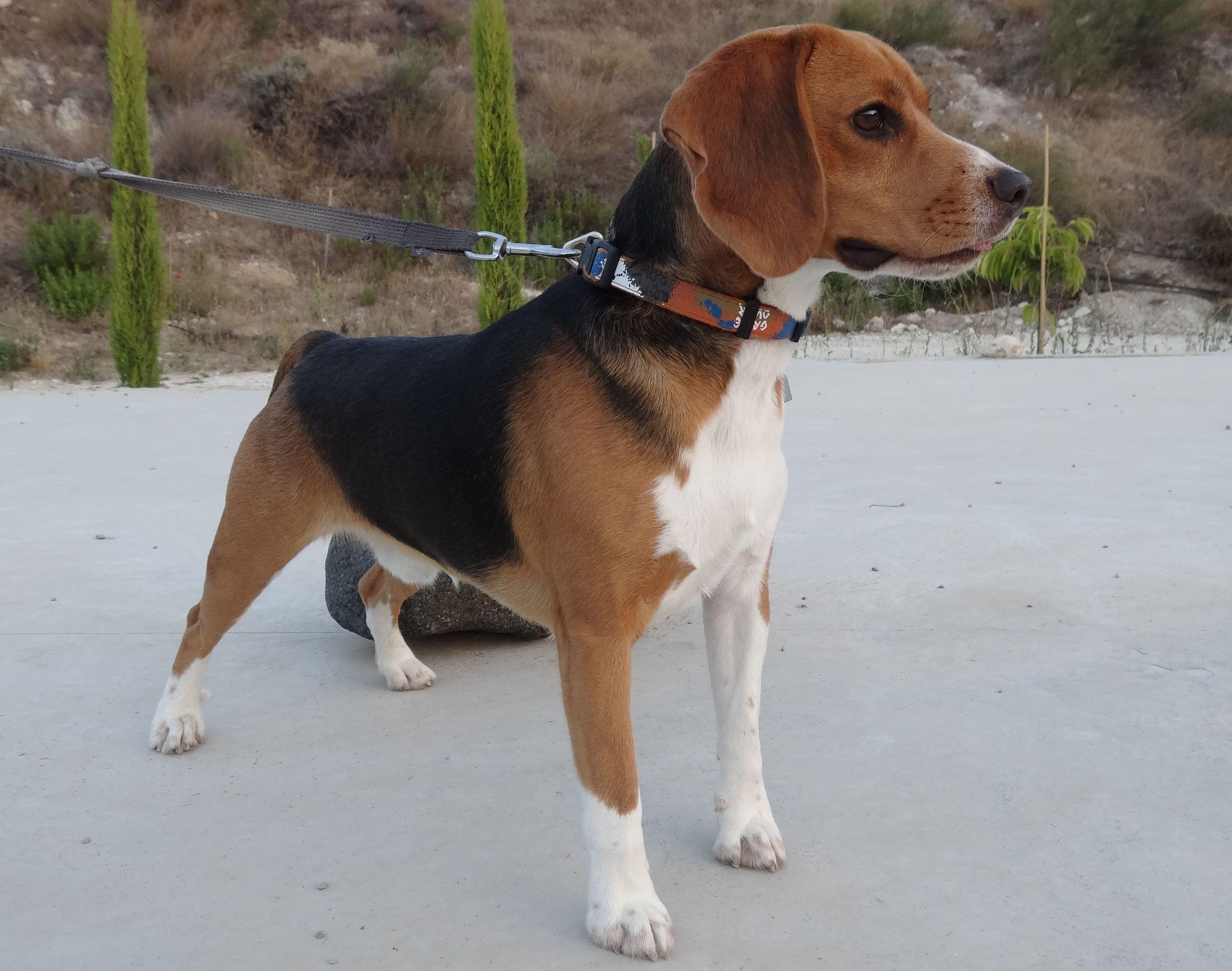 dog_ranch_cyprus_dog_hotel_greco.jpg