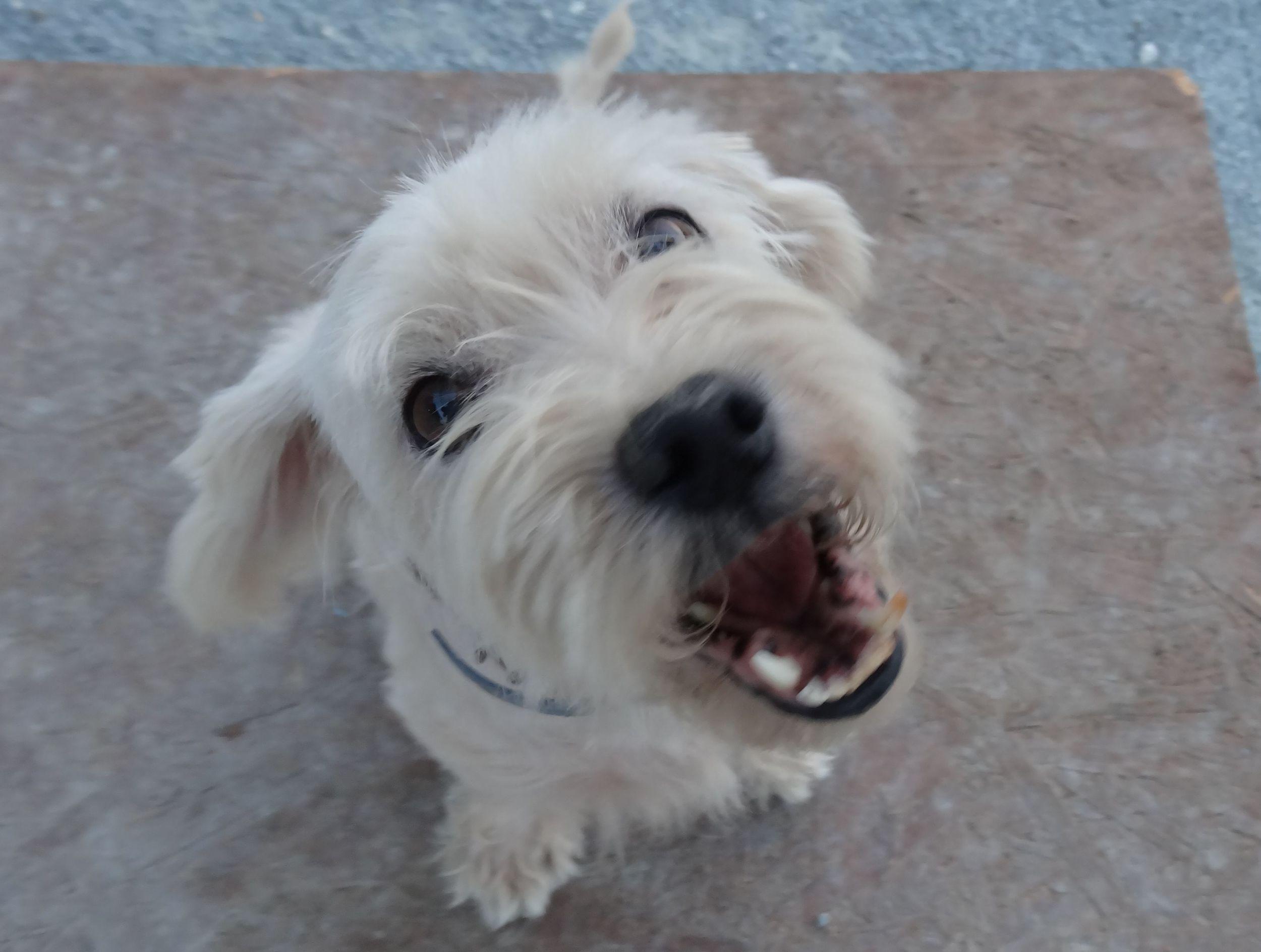 dog_ranch_cyprus_dog_hotel_bingo.jpg
