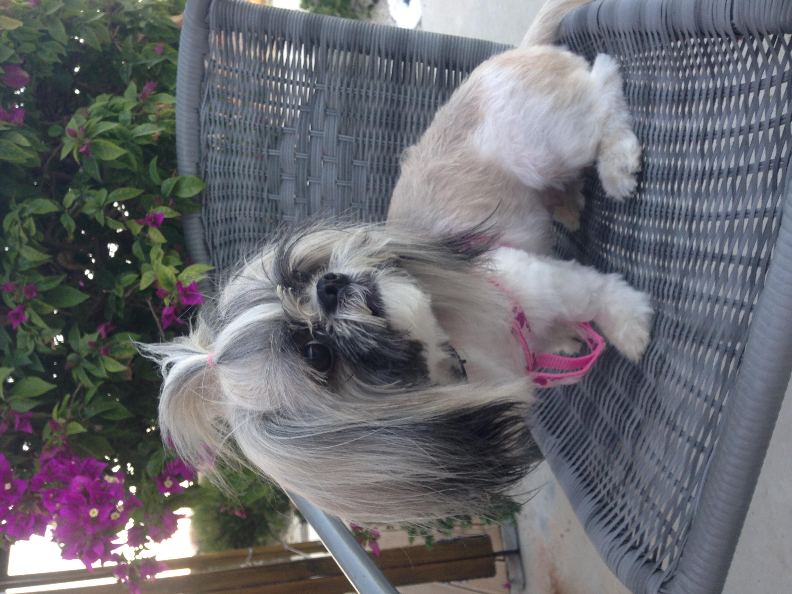 dog_ranch_cyprus_dog_hotel_Lady_chichi.jpg