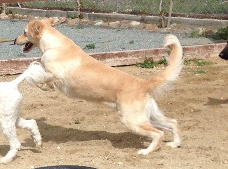 dog_ranch_tequila.jpg
