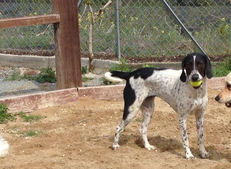dog_ranch_cyprus_dog_hotel_blanket.jpg
