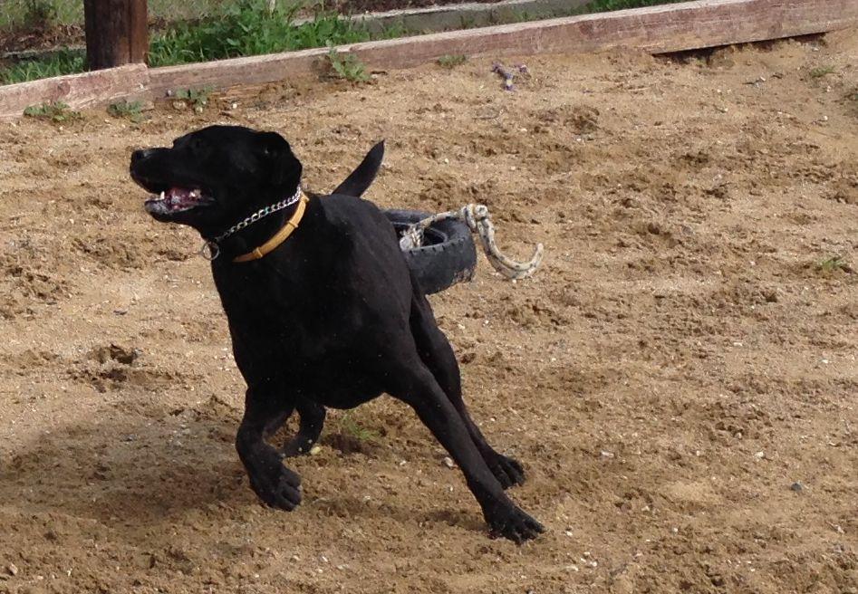 dog_ranch_cyprus_dog_hotel_pluto.jpg
