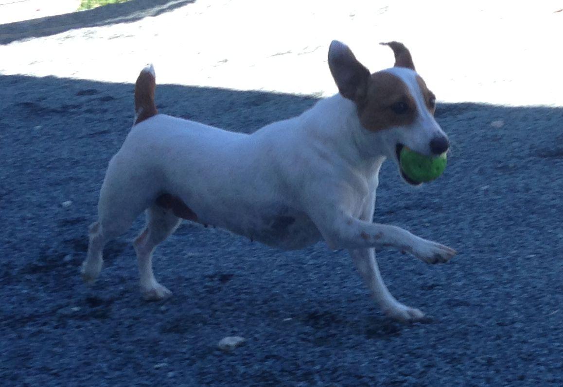 dog_ranch_cyprus_dog_hotel_gioia.jpg