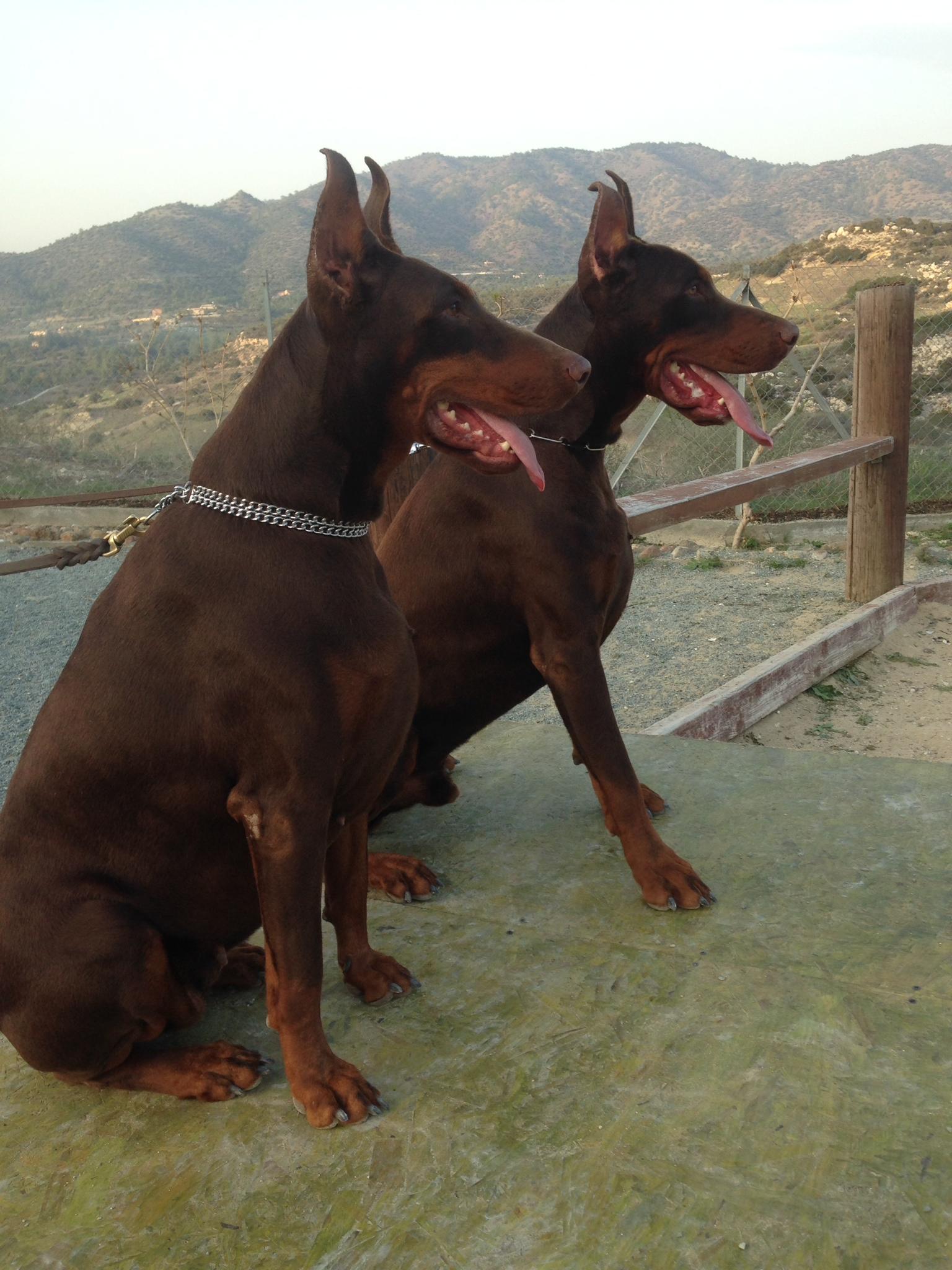 dog_ranch_dog_hotel_cyprus_limassol_enzo&kirshka.JPG