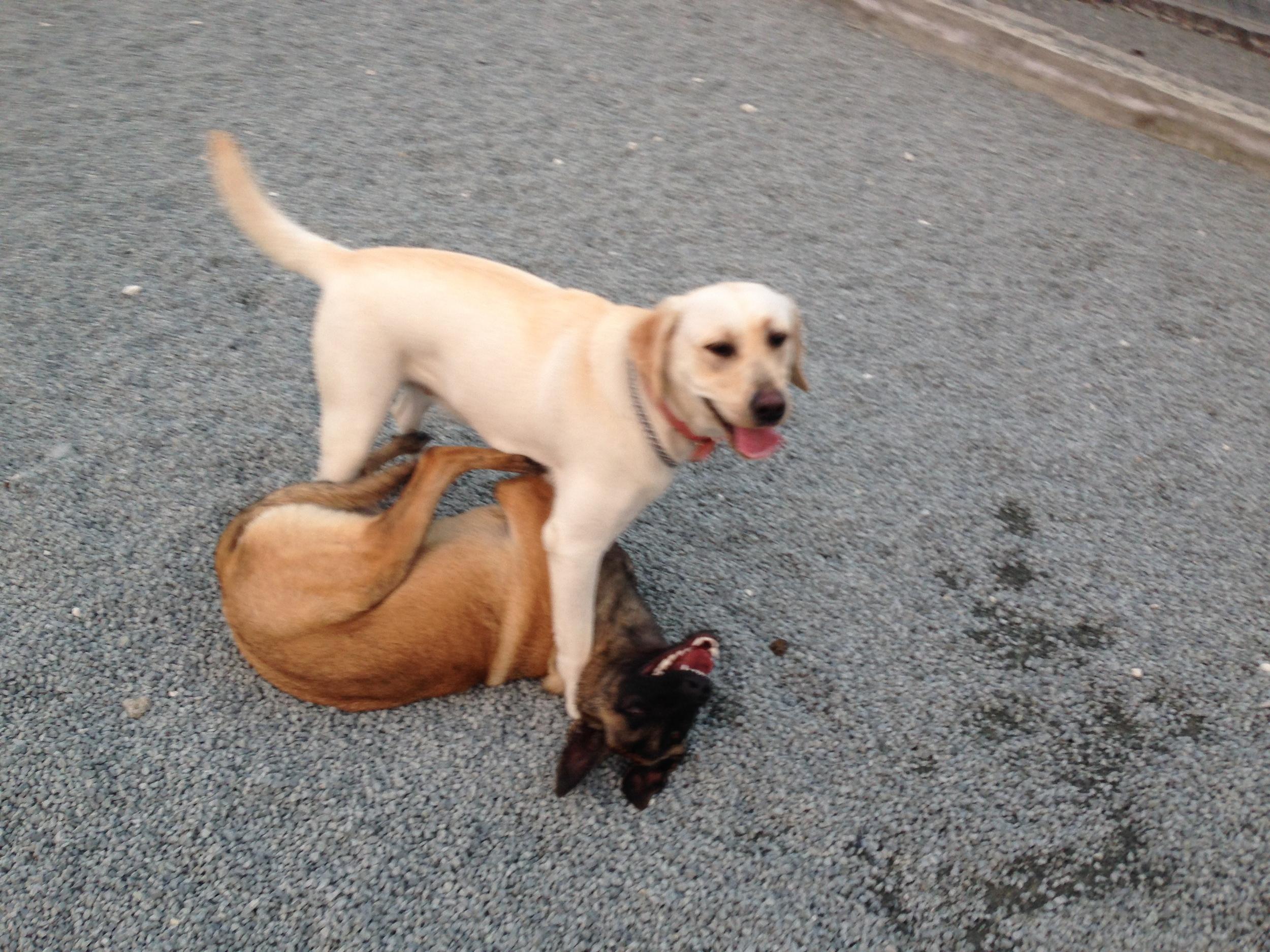 dog_ranch_dog_hotel_cyprus_limassol_Cobra&Buena.jpg