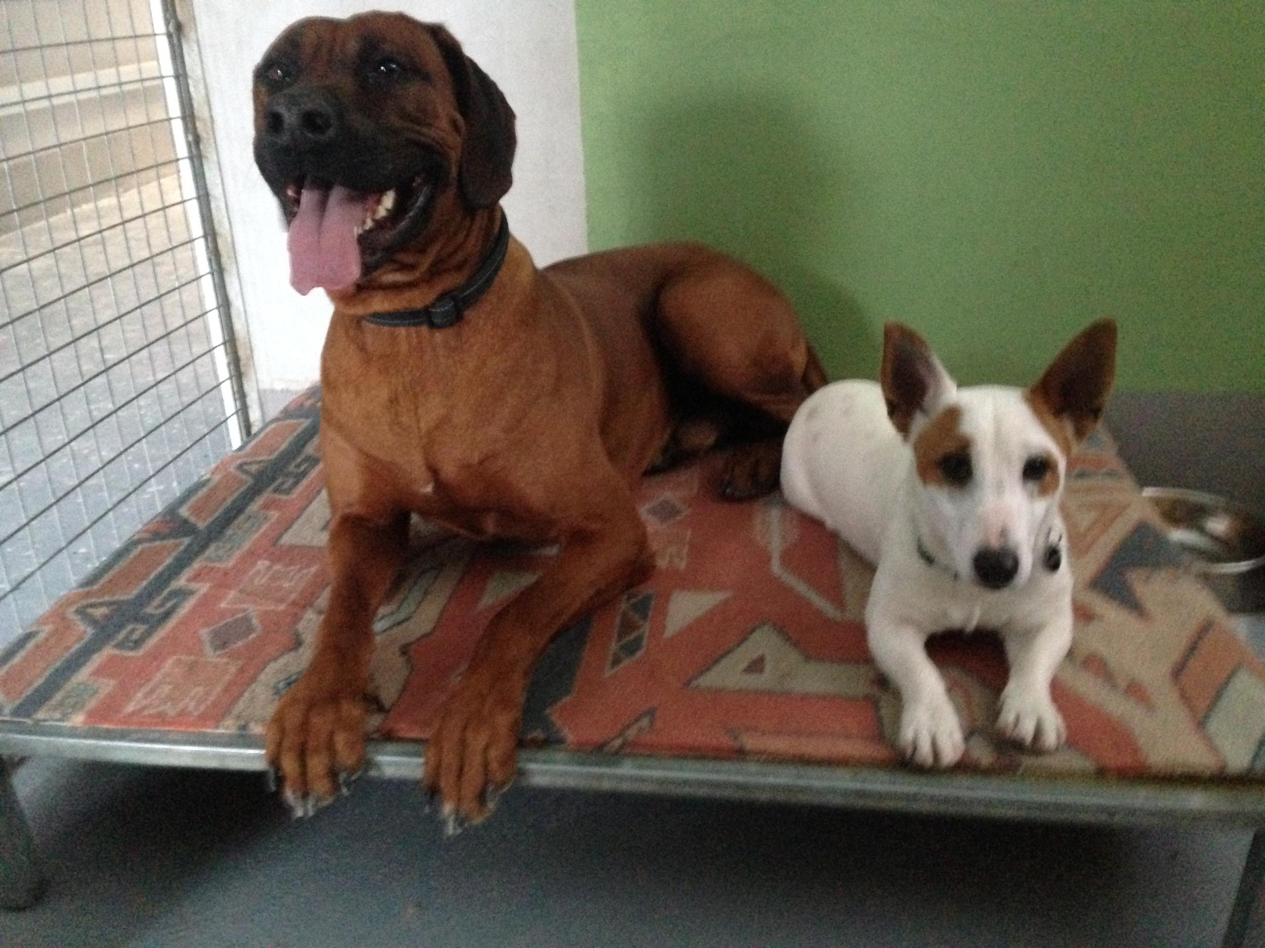 dog_ranch_dog_hotel_cyprus_limassol_the_boyz.jpg