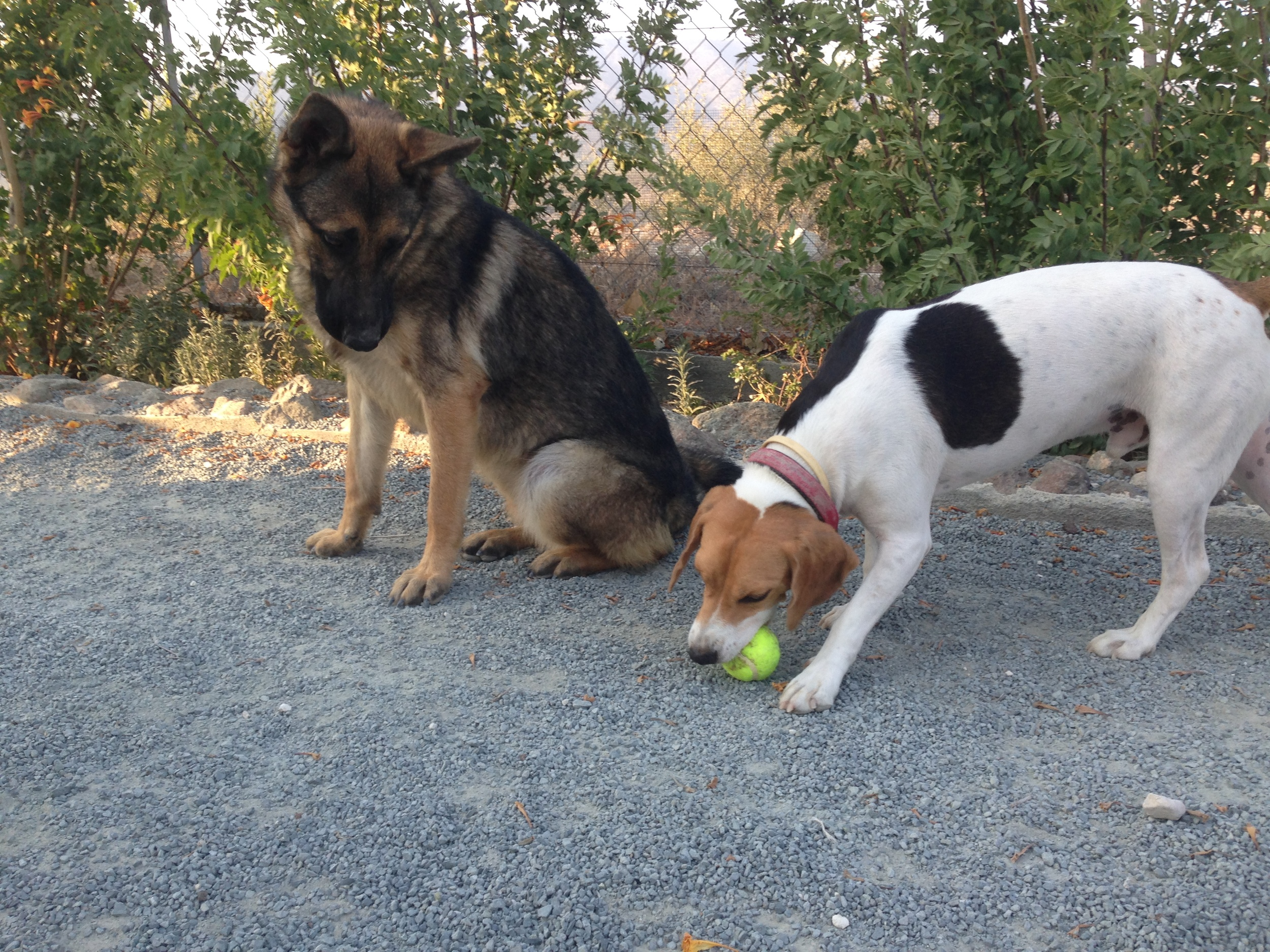 dog_ranch_dog_hotel_cyprus_limassol_freddy.jpg