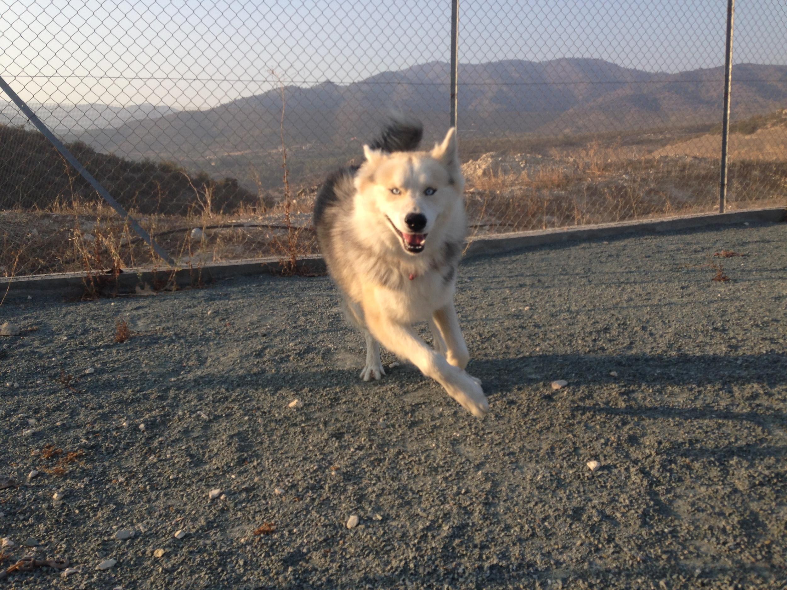 dog_ranch_dog_hotel_cyprus_limassol_hugo.jpg