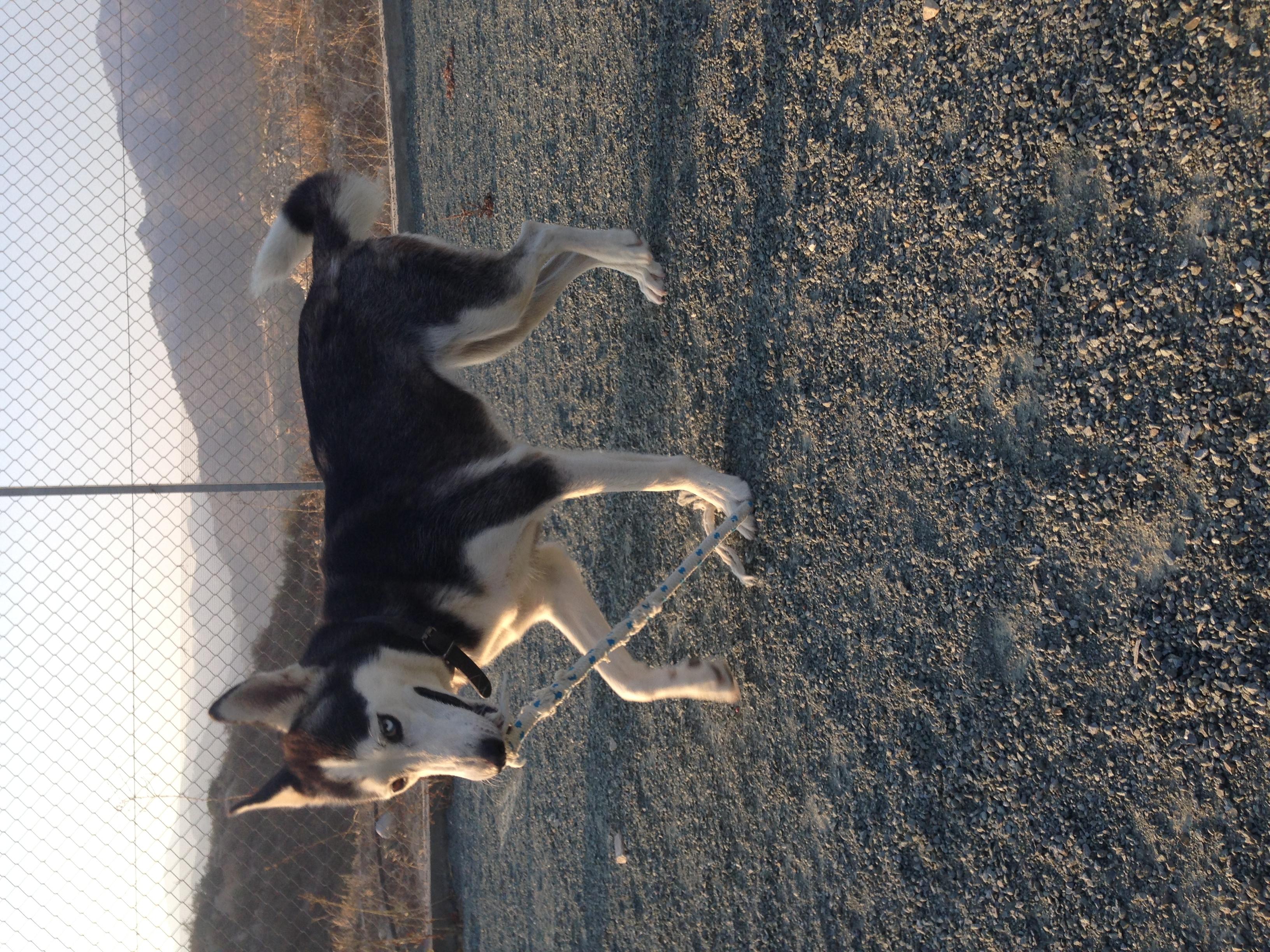 dog_ranch_dog_hotel_cyprus_limassol_astrea.jpg