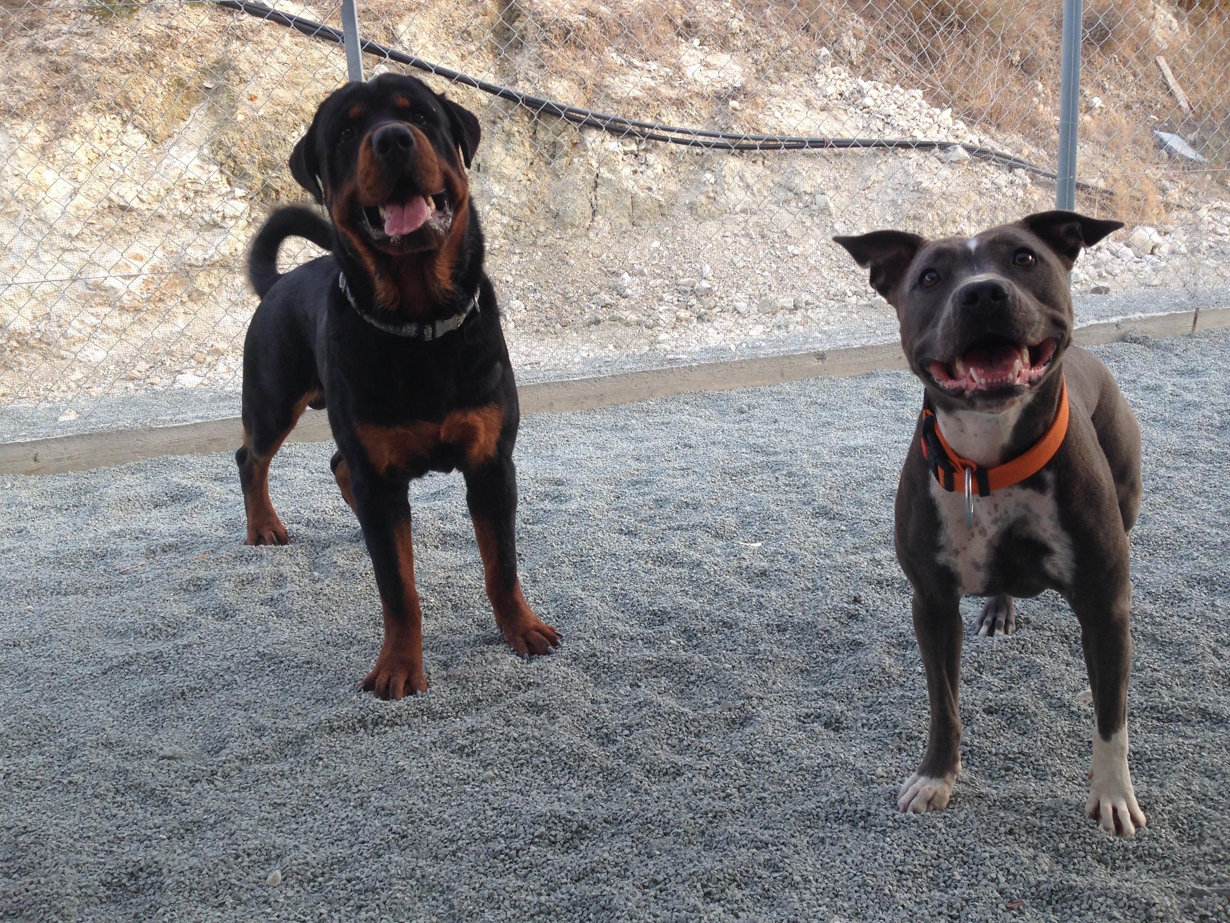 dog_ranch_dog_hotel_cyprus_limassol_mia&maxomos.jpg