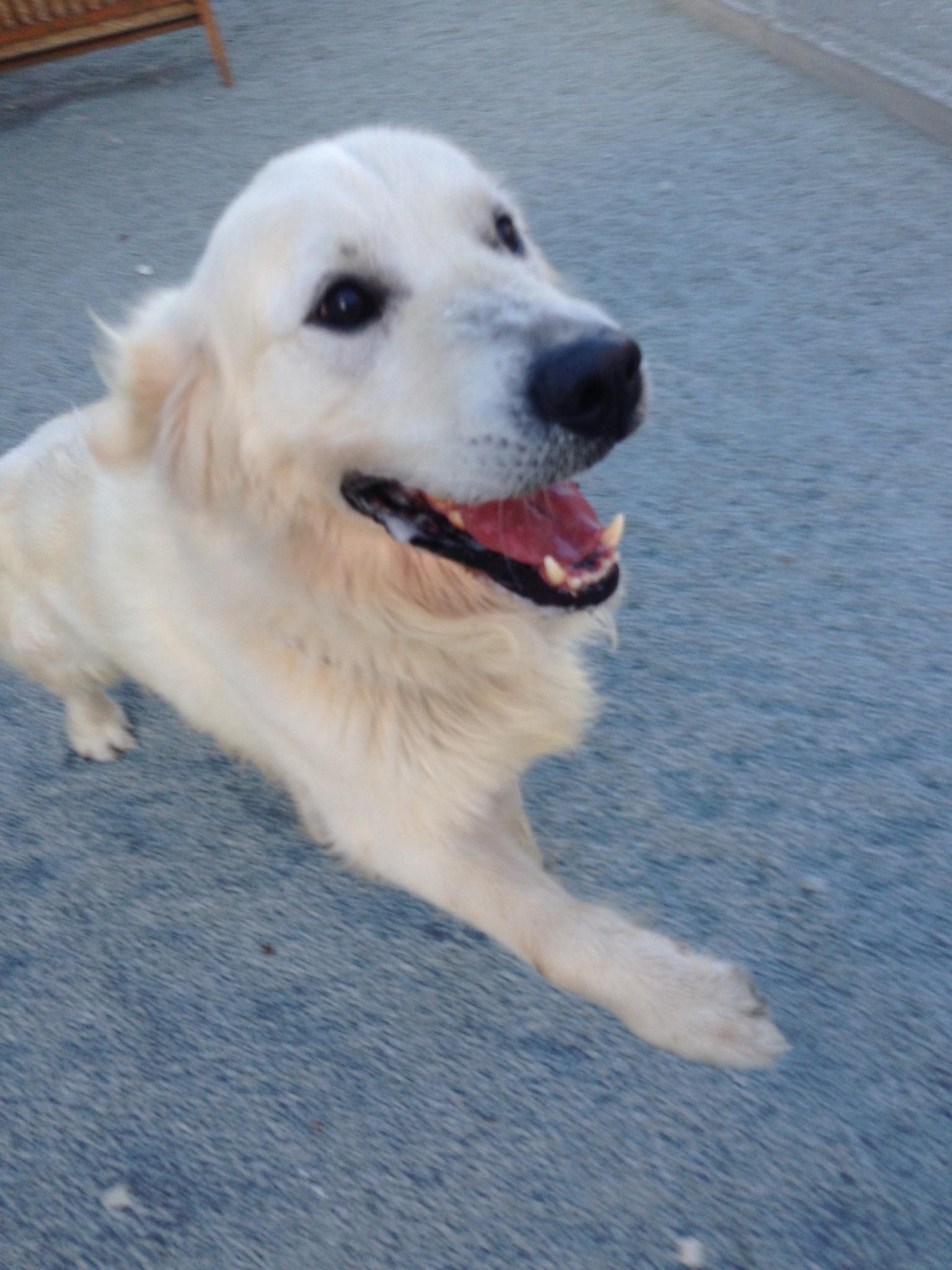 dog_ranch_dog_hotel_cyprus_limassol_oliver.jpg