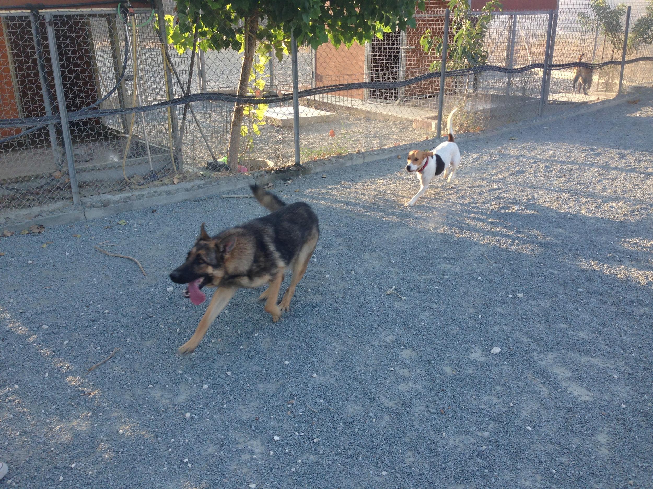 dog_ranch_dog_hotel_cyprus_limassol_freddy&tash.JPG