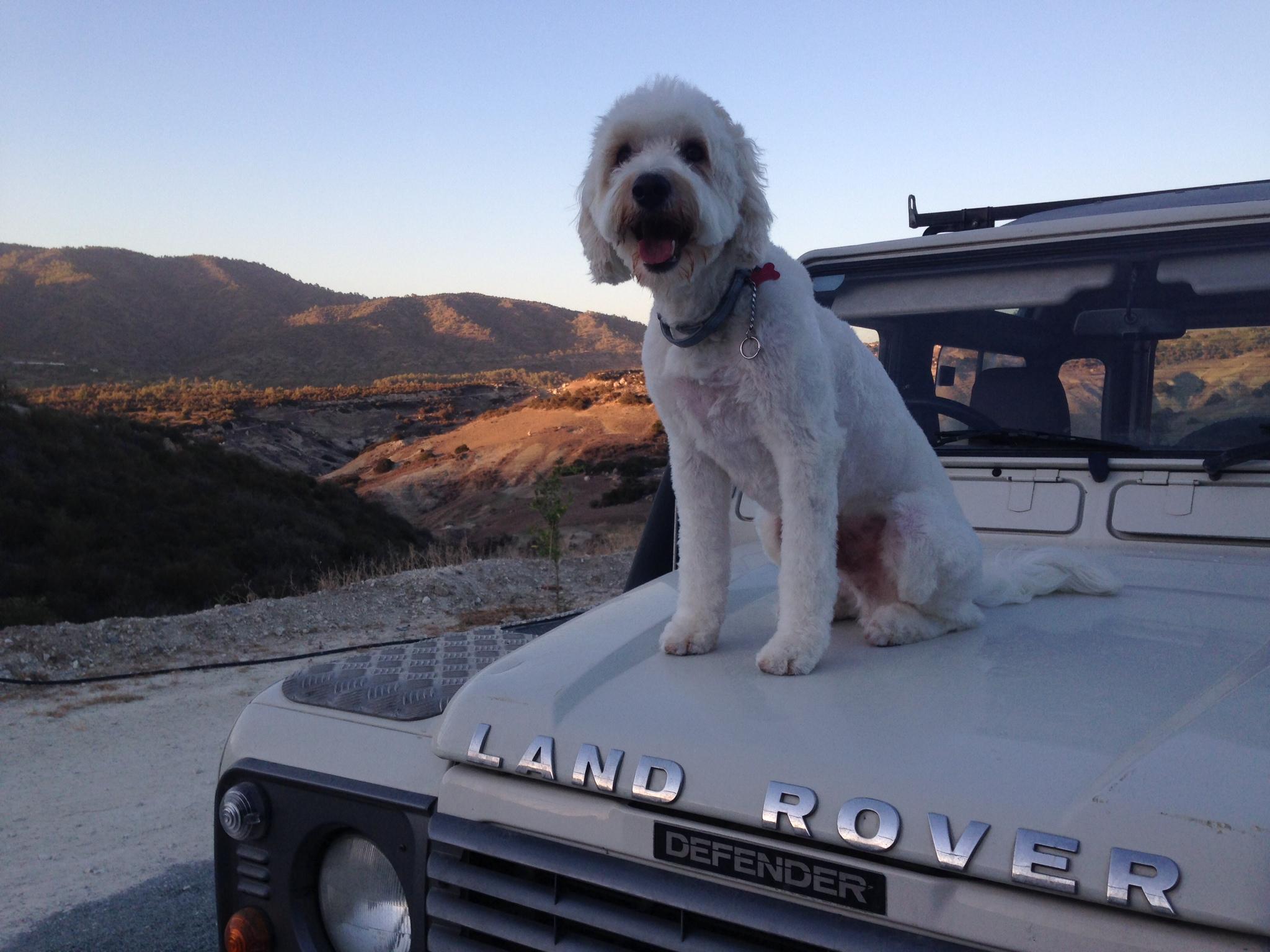 dog_ranch_cyprus_dog_hotel_sunset_mailo.JPG