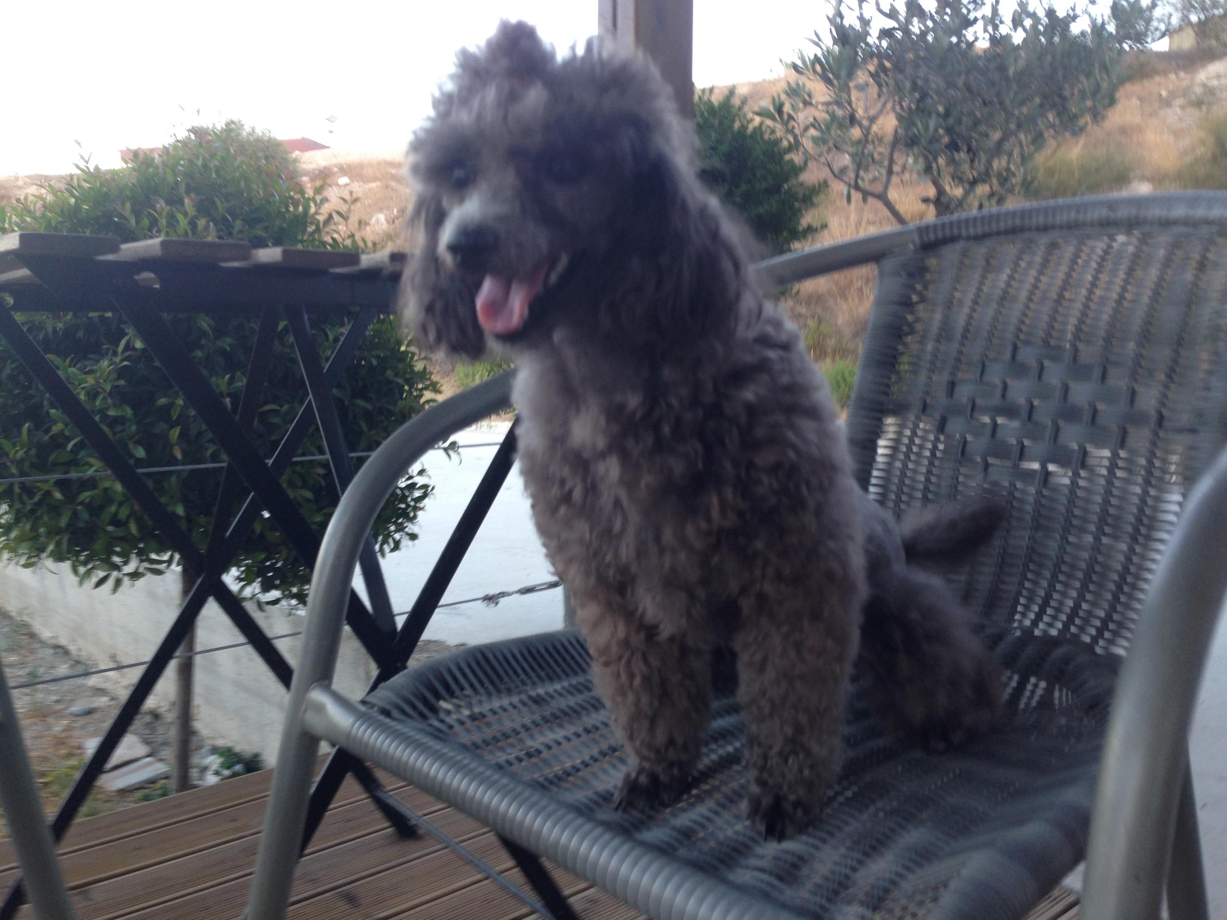 dog_ranch_dog_hotel_cyprus_limassol_kalli.jpg