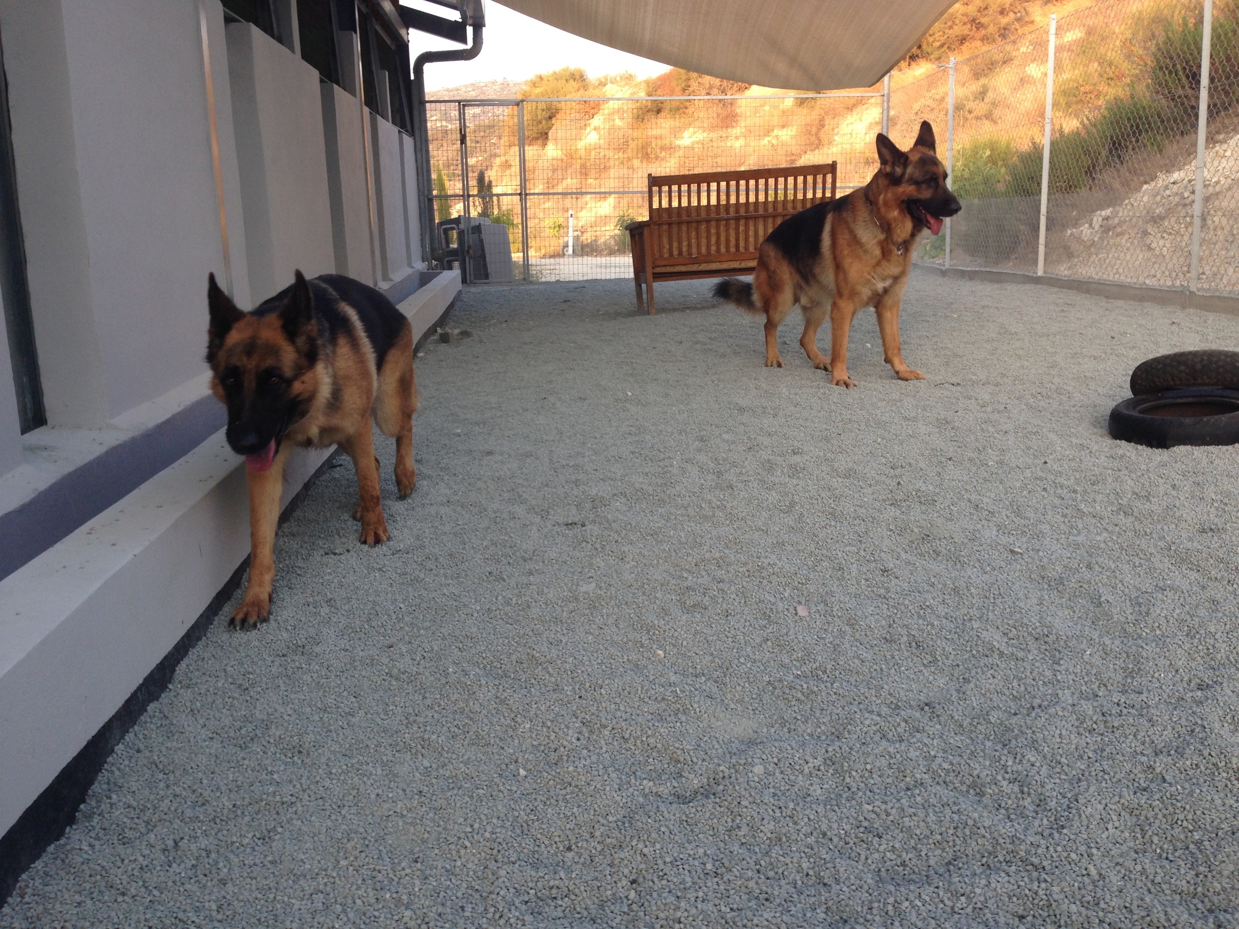 dog_ranch_dog_hotel_cyprus_limassol_brando&nelly.jpg