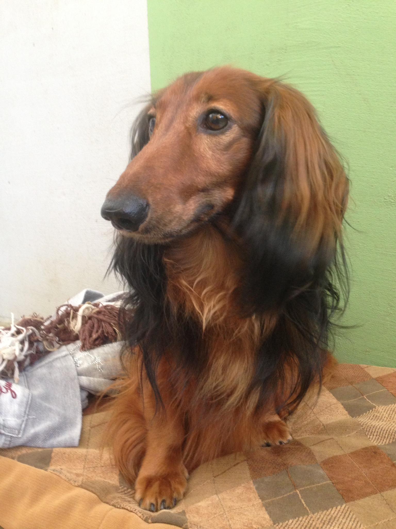 dog_ranch_dog_hotel_cyprus_limassol_lavric.jpg